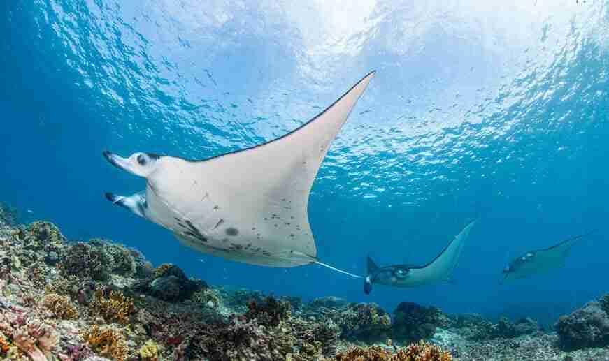 duiken in komodo | Manta Rhei Dive Center