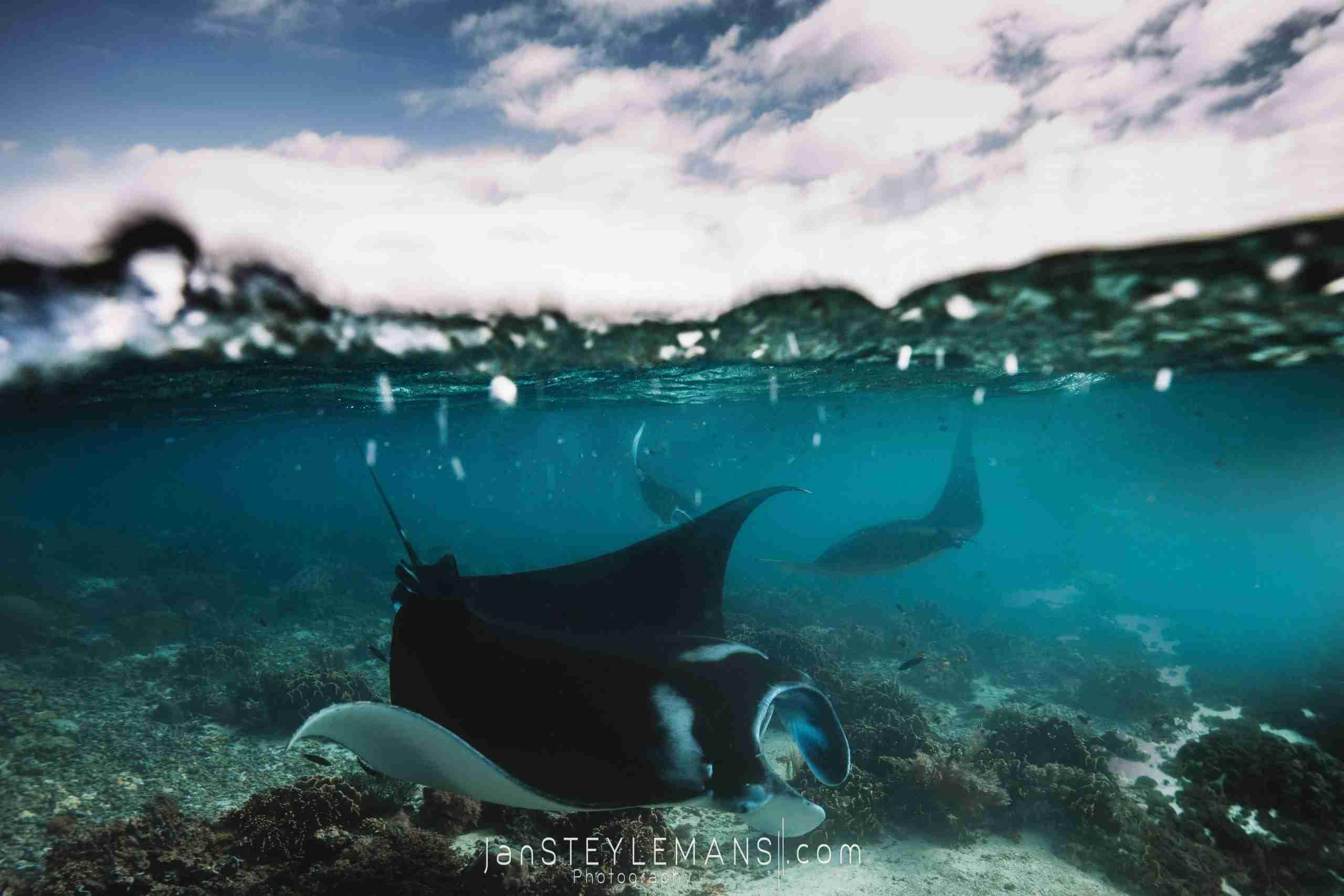 Manta Rhei Dive Center Komodo