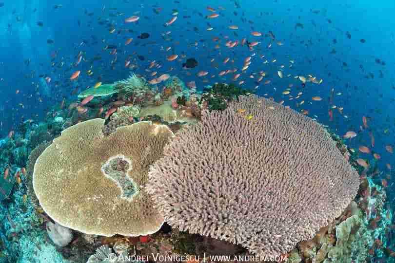 Aquarium Day   Batu Bolong   Day Trips Diving   Manta Rhei Dive Center