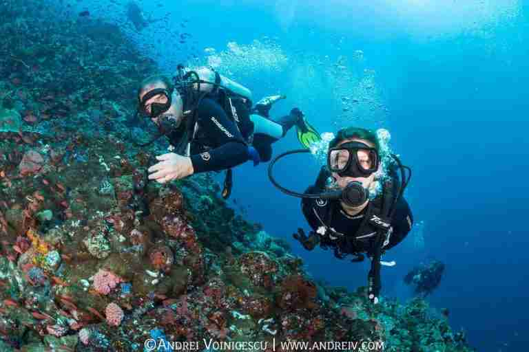 Day Trips Diving | Diving with Manta Rhei Dive Center