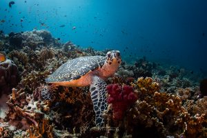 Explore the marine life of Komodo National Park and enjoy your first time diving.