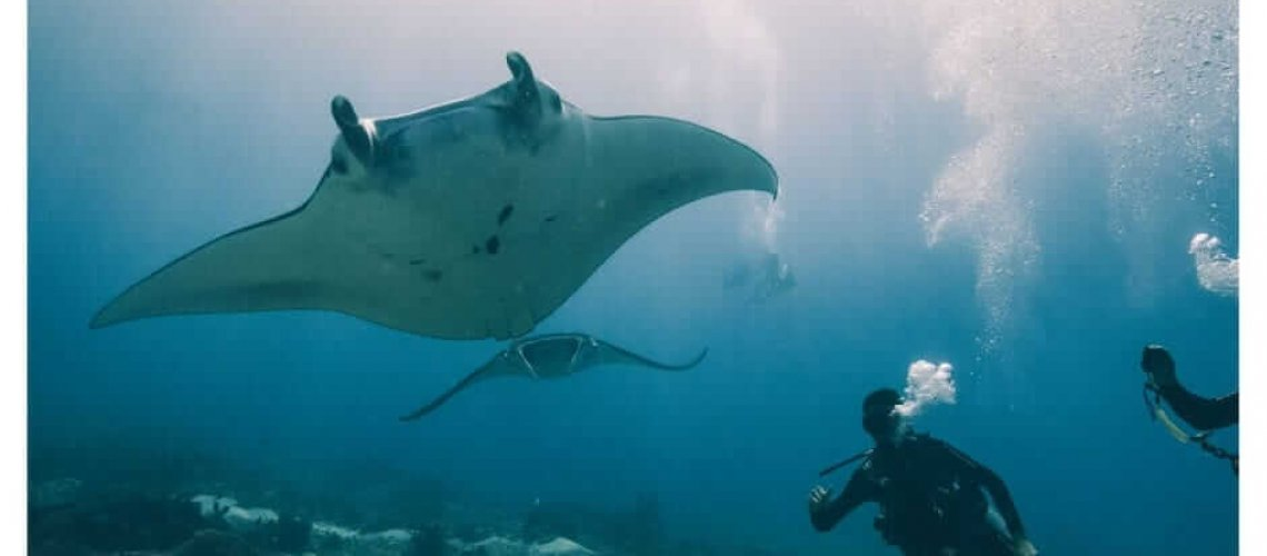 Manners Maketh the Diver | Manta Rhei Dive Komodo